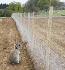 Rabbit Repellent For Gardens by Rabbit Proof Garden Fencing Lovetoknow