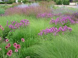 american beauties native plants 73 best landscape design images on pinterest landscape design