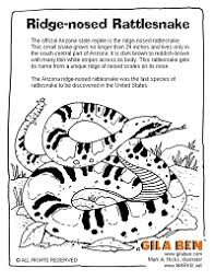 arizona state reptile ridge nosed rattlesnake