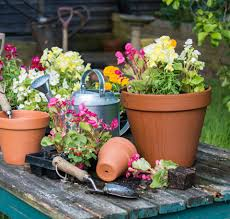 how to avoid drowning the plants in your container garden