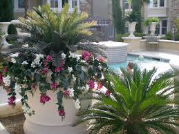 outdoor plants around the pool house design