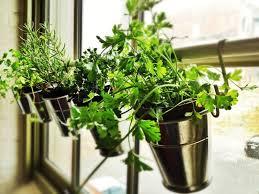 indoor herb garden kits to grow herbs indoors hgtv organic gardening herb garden kit indoor inside garden kit grow