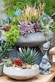 centro garden succulent bowls succulent garden pinterest