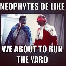 Alpha Meme - 14 best greek humor images on pinterest funny memes ouat funny