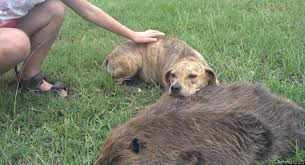 dog mourns death of beaver friend video huffpost