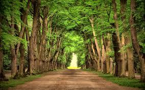 download beautiful landscaping trees solidaria garden