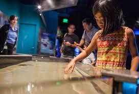 Georgia Aquarium Floor Plan Get Up Close And Personal With Georgia Aquarium Georgia Aquarium