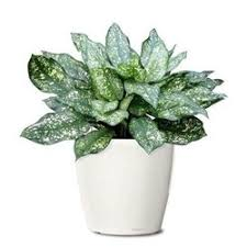ornamental plants for indoor ornamental plants to beautify your