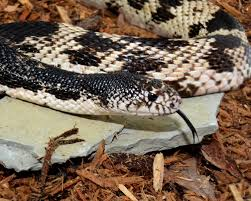 Snake Holes In Backyard Virginia Living Museum So You Found A Snake In Your Yard