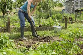 How To Start A Rock Garden by Brick Patio And Cedar Planters Garden Ideas
