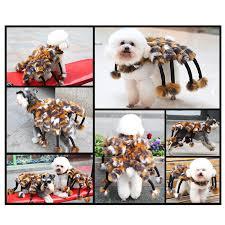 Dog Spider Halloween Costume Collection Spider Dog Halloween Costume 30 Awesome Dog Cat