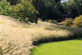 ornamental grass border landscape traditional with