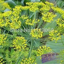 edible flowers for sale discount edible flowers seeds 2017 edible flowers seeds on sale
