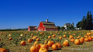 fall pictures with pumpkins for desktop misc red england lake beautiful leaves row landscape colors