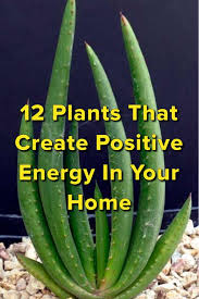 12 home plants for positive vibes creating positive energy