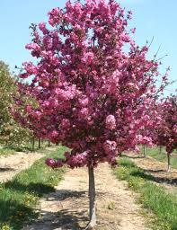 crabapple fort wayne trees