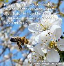 bienen sprüche bilder sprueche net - Bienen Sprüche