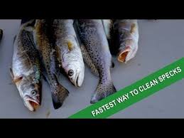 The Absolute Best Cheap Seafood by The Absolute Best Way To Fillet Speckled Trout Youtube