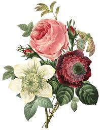 Meaning Of Pink Roses Flowers - the meaning of victorian flower messages petal talk