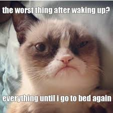 Tired Cat Meme - image 436646 grumpy cat know your meme