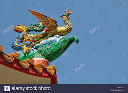 peacock symbol for love dignity high rank and beauty chinese