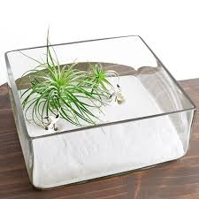 garden terrarium kit square dish