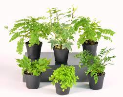 best terrarium plants picture how to create a best terrarium
