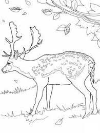 animal illustrations paint color dover publications