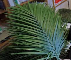 palm fronds for palm sunday using michigan grown fronds for palm sunday mlive