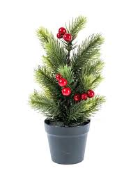 potted tree live potted trees can be rented or bought from