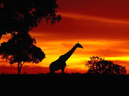 wallpapers africa wildlife animals albums 1920x1200 557457 africa