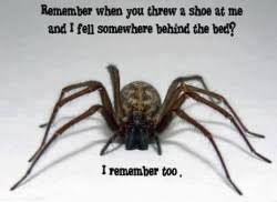Funny Spiders Memes Of 2017 - funny car meme how i normally drive