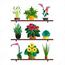 office plant illustration of houseplants indoor and office plants in pot