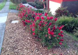 landscaping with australian native plants popular hedging plants native plant and revegetation specialists