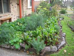 backyard houston urban gardeners rayshers foodscape summer