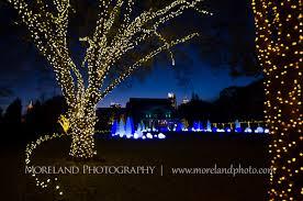 atlanta botanical gardens christmas proposal derek chelsea