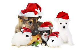 2015 pretty christmas backgrounds wallpapers images photos
