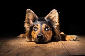 Are All Dogs Colour Blind If Dogs Aren U0027t Colorblind What Colors Can Dogs See Dog
