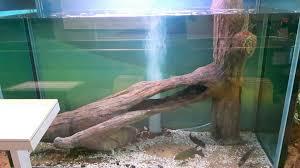 aquariums and terrariums rockscapes artificial boulders