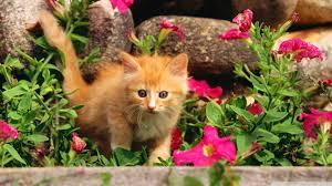 halloween kitten background 1920x1080 kitten spring wallpaper images collection of kitten spring