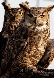 great horned owl tattoo 3 best tattoos ever
