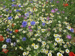 plants native to scotland buglife