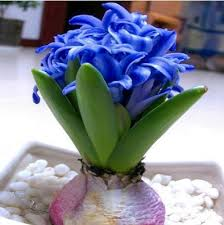 easy flowers to grow indoors flower indoor plants flowering houseplants ikat live without you