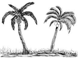 easy palm tree drawing how to draw realistic palm trees