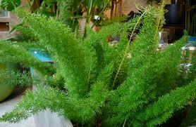 9 common houseplants poisonous to your pet