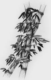 drawn bamboo pencil drawing pencil and in color drawn bamboo