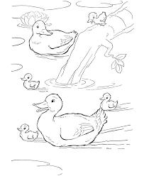 farm animal coloring ducks swimming farm pond