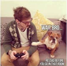 Funny Animal Memes Tumblr - free funny animal 图片with captions tumblr funny animal memes tumblr