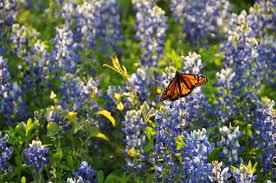 image gallery flight of the butterfliesflight of the butterflies