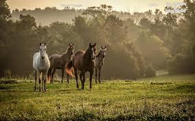 ferrari horse vs mustang horse horses u2013 wallpaperext net